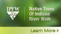 IPFW Native Trees Of Indiana Riverwalk