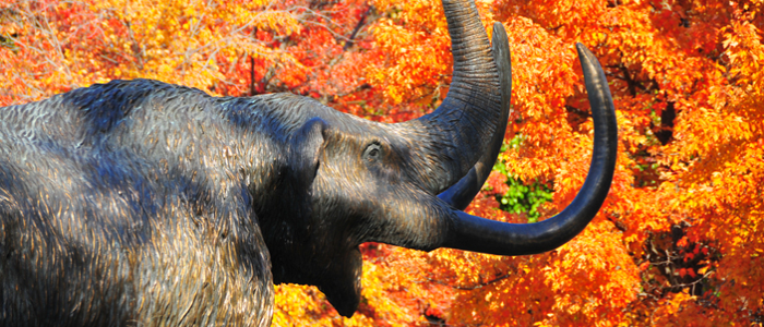 CHHS Home Page Photo - Mastodon Statue in the Fall