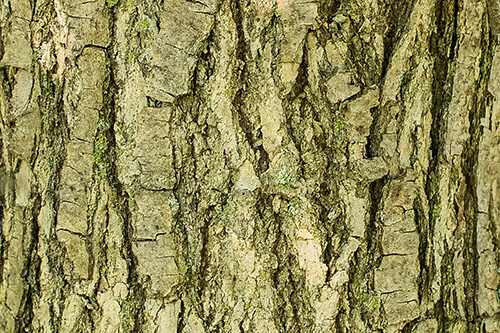 Close-up of bark on the trunk